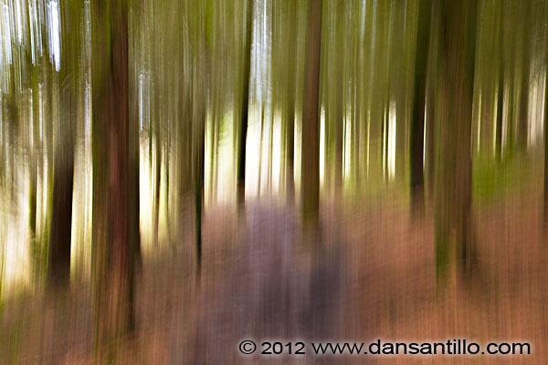 Ystradfellte Forest